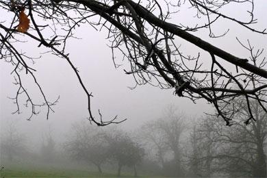 Días grises......